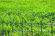 PVC (Coated) Garden Fence